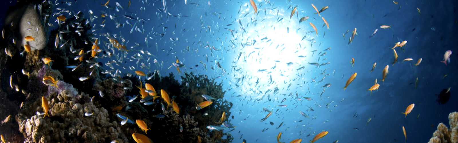 Scuba Diving in Sharm