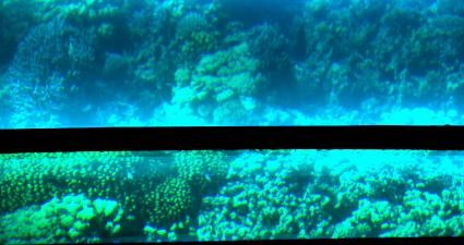 Corals barco de cristal