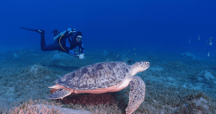 buceo con tortuga