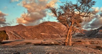 ajman desert